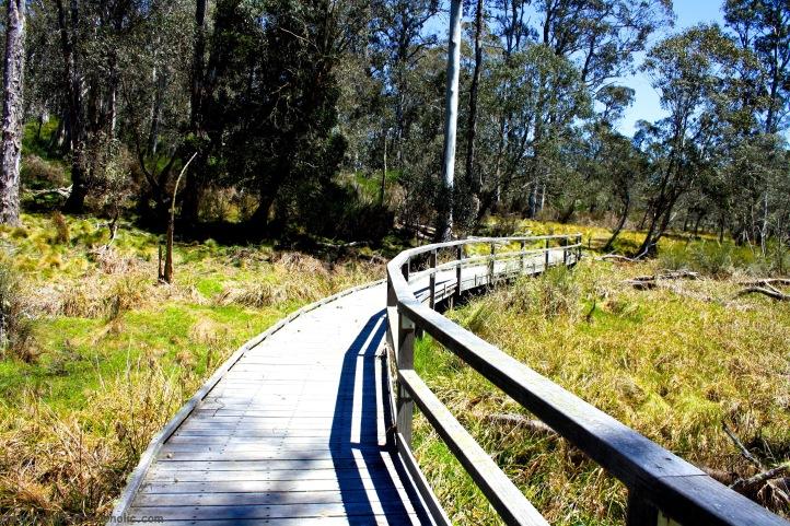 Polblue Swamp Walk