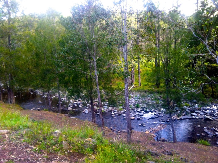 Manning River - the campgrounds were walking distance from the river